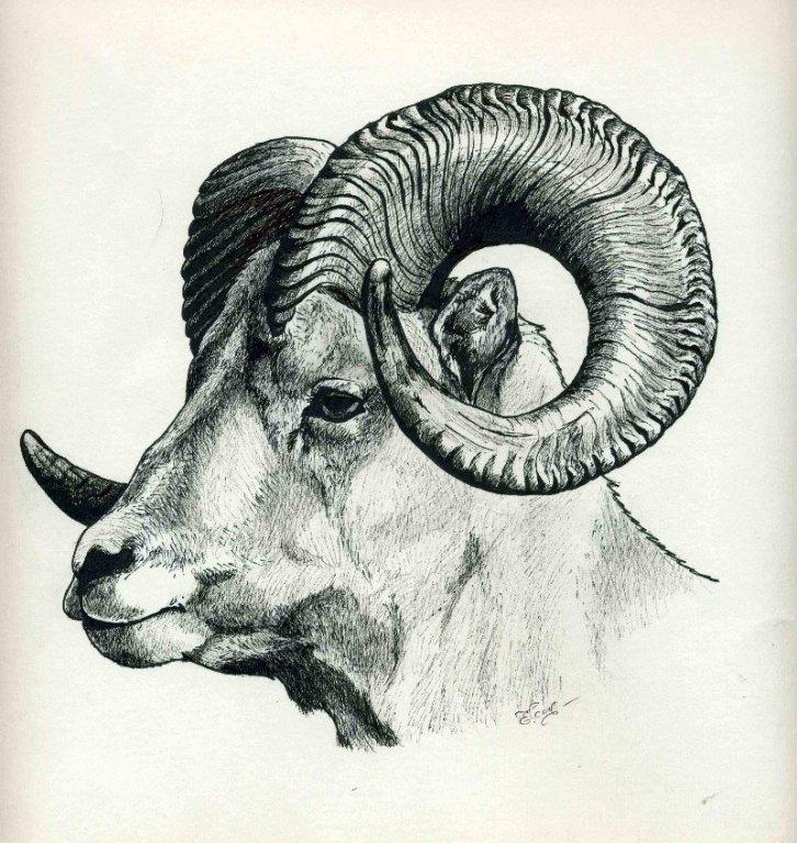 wild_goat_ink