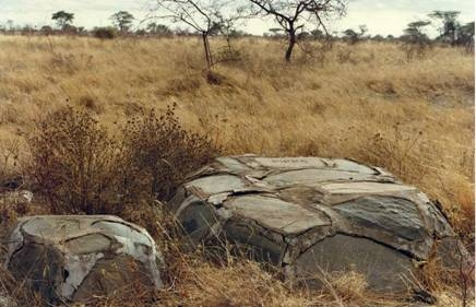 Graves of Pippa and probably of one of her cubs in Meru NP