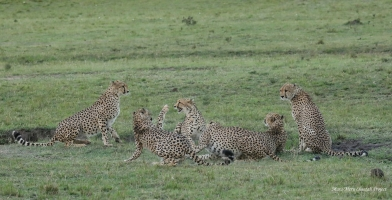 Amani is in the middle, surrounded by five males