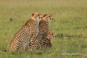 Three of the Chai Boys in October 2019. Male which we spotted alone in the end of September is the one sitting in the middle