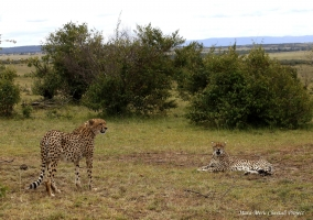 Cub is approaching Malaika