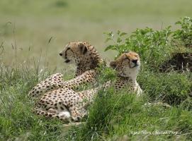 Lemai Boys resting