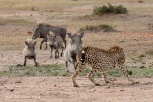 Nora vs warthogs