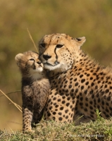 Tender cub and sorrowful mother