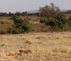 Mara-Meru Cheetah Project