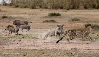 Nora and warthogs