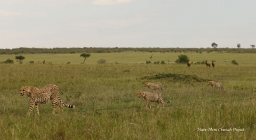 Nashula with her three cubs
