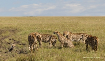 Nora (in the middle) surrounded by males