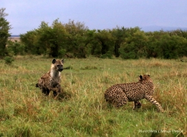 Mara Meru Cheetah Project