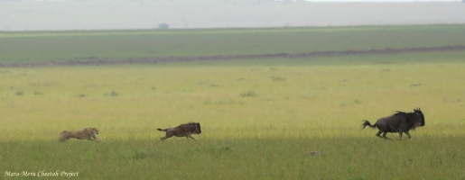 Rani hunting. Photos taken from a distance of more than 200 meters
