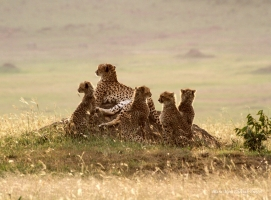 With 5 cubs