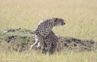 Rani is back in the Mara Triangle