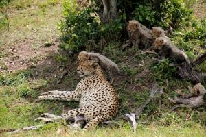 2014, 6 cubs