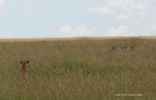 Five males approach Mkali and Mwanga