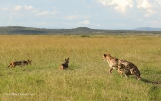 Mkali against jackals