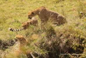 Mkali (up left) and Mwanga (up right) watching Chai Boy