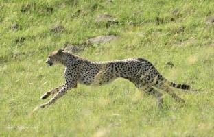 Olope visits Maasai Mara National Reserve and The Mara Triangle