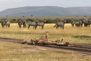 3 March - World Wildlife Day celebration in the Mara