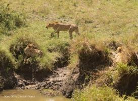 ENCOUNTER OF TRAVELERS – MKALI, MWANGA and CHAI BOY