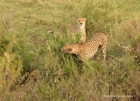 Mkali and Mwanga approaching Chai Boy