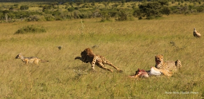 Olanyuani is chasing a jackal