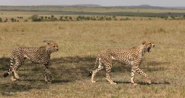 Winda (right) followed by Olonyok