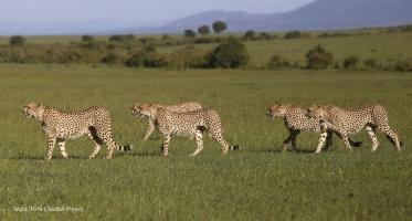 Naming the Fast Five-Tano Bora males