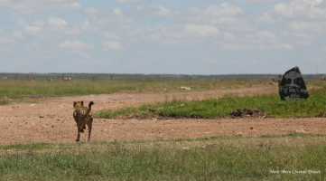 NEW MALE IN THE RESERVE – THE SON OF ENTITO