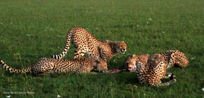 Malaika and Mugi sharing a meal, cubs watching
