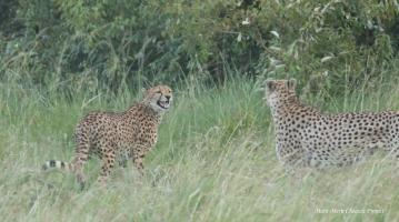 Mkali (left) and Olpadan (right)