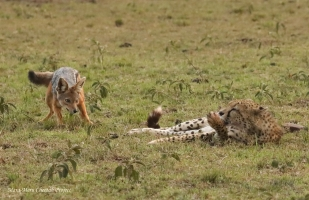 Olchorre – the Mara traveller