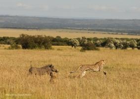 Kisaru's family running away from warthogs