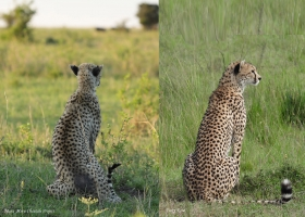 Maridadi in the end of 2018 (left) and now (right). Thank you Vicky Rose for you great photos!