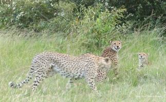 Olpadan (left) is walking towards Mkali and Mwinga