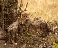 Cubs of Naretoi