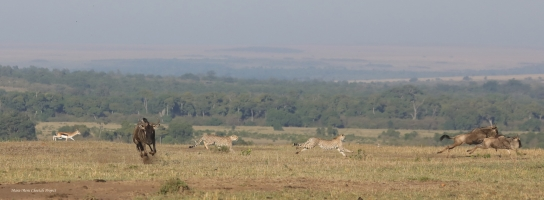 Olpadan followed by Olarishani are targeting the same antelope