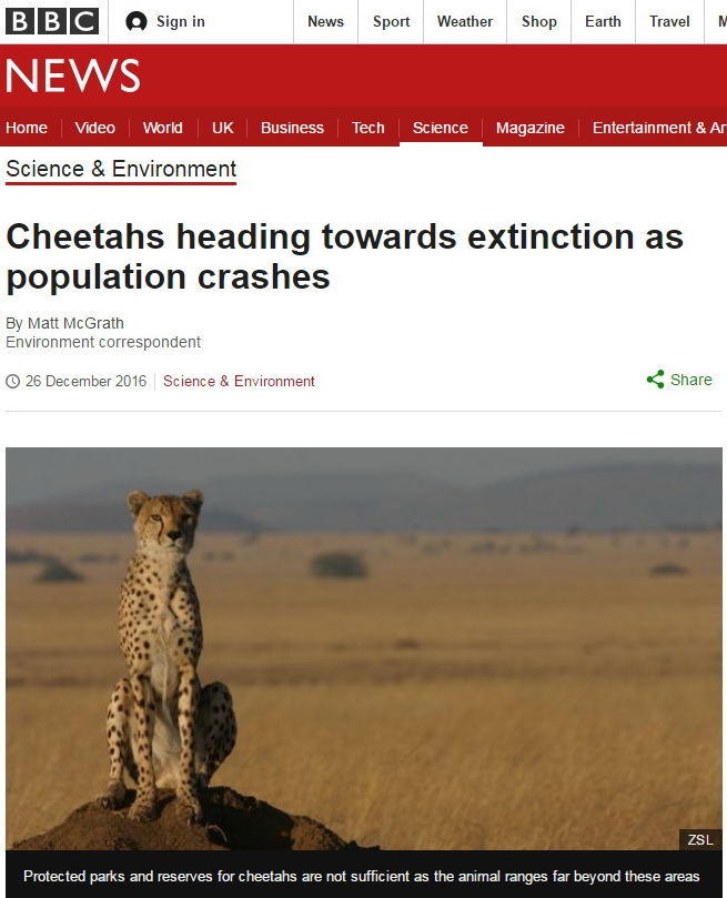 BBC News: Cheetahs heading towards extinction as population crashes