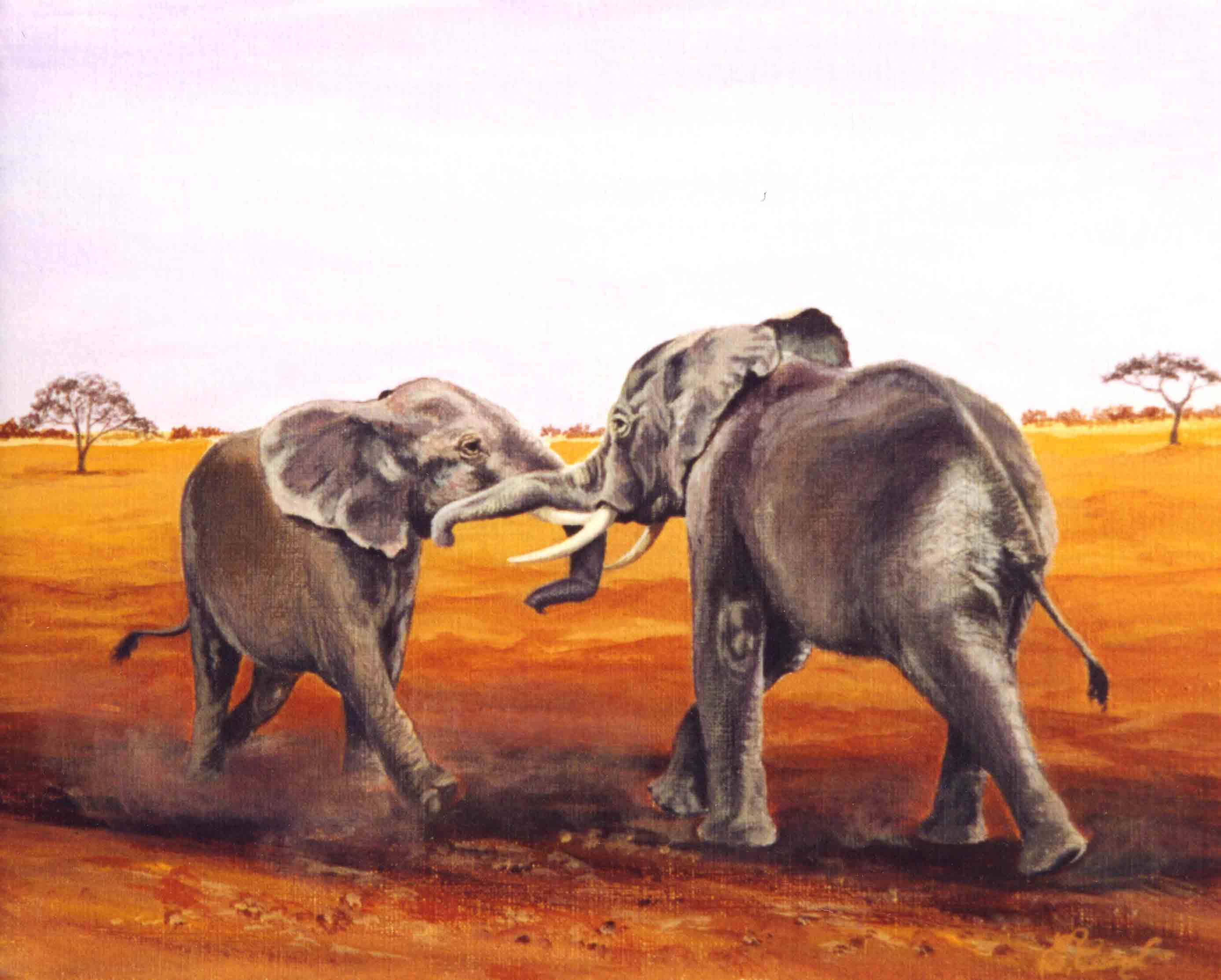Elephants pl