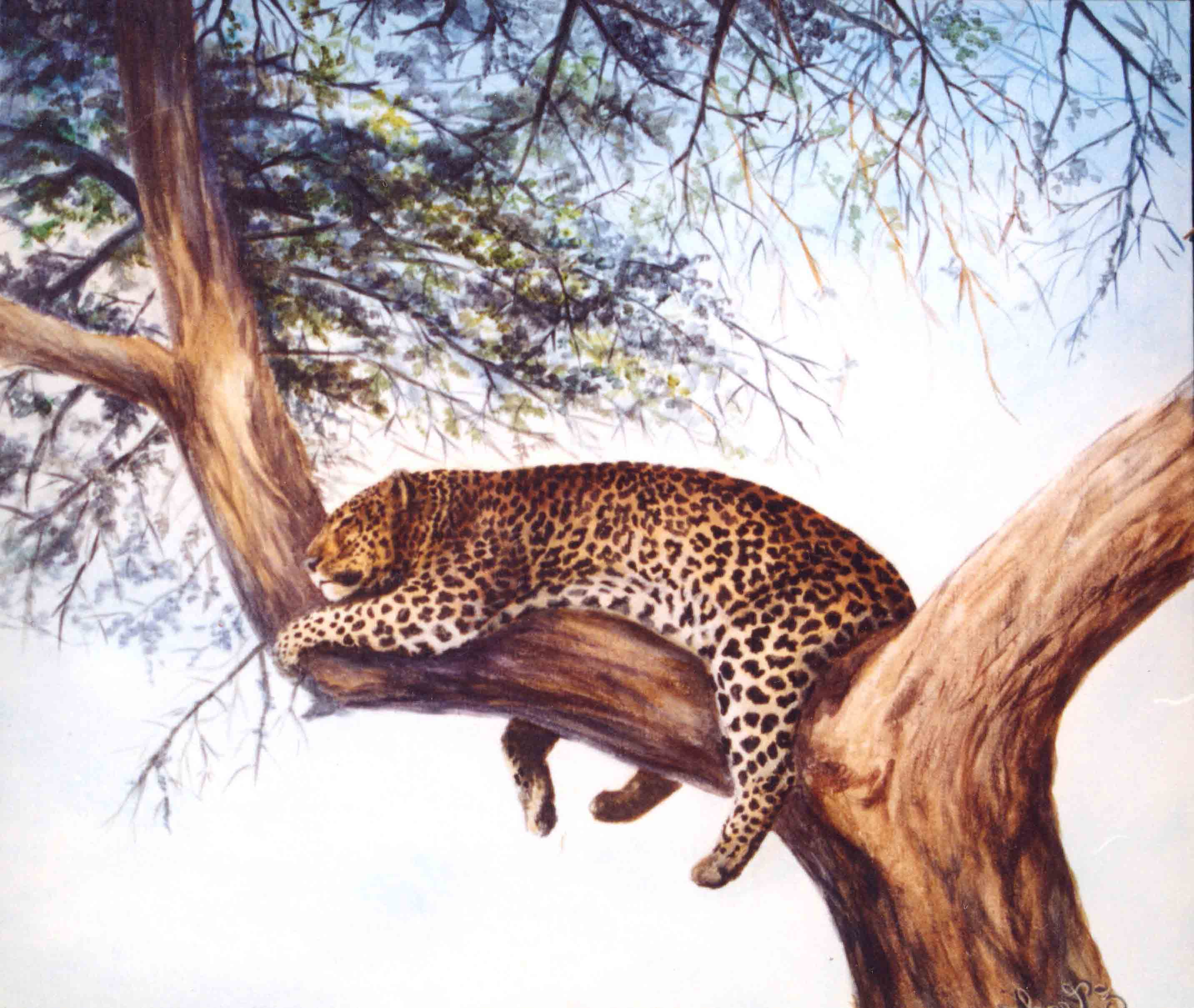 Leopard sleeping-r
